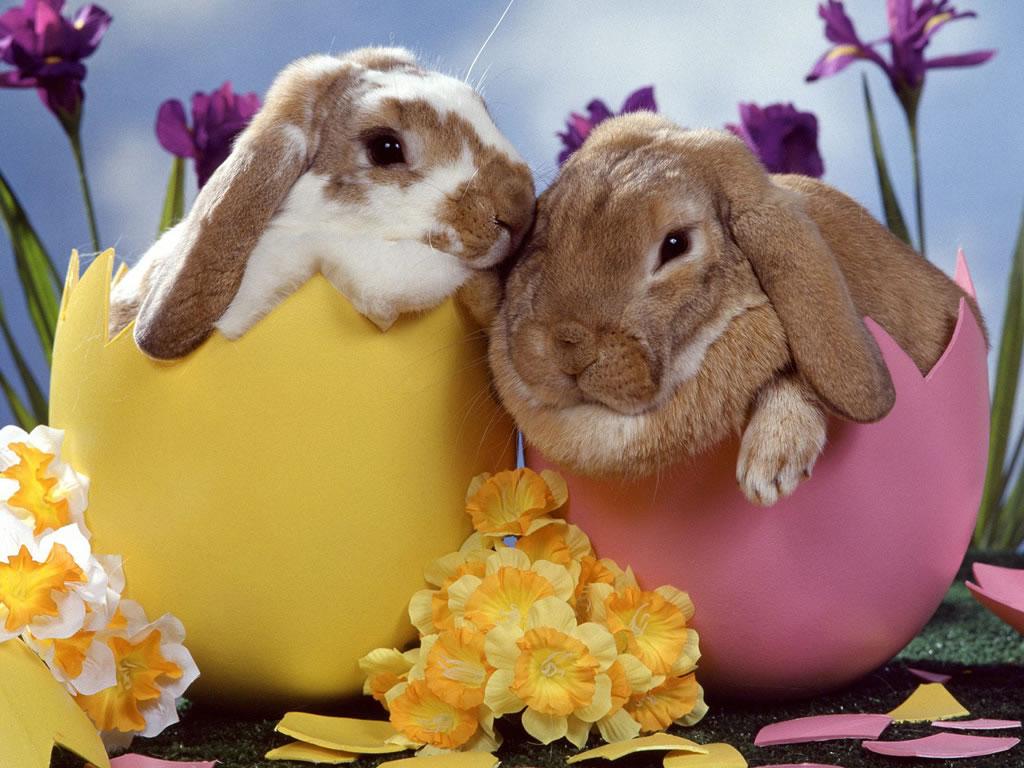 bunnies_eggs.jpg