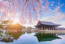 stock-photo-gyeongbokgung-palace-with-cherry-blossom-tree-in-spring-time-in-seoul-city-of-korea-south-korea-514612561.jpg
